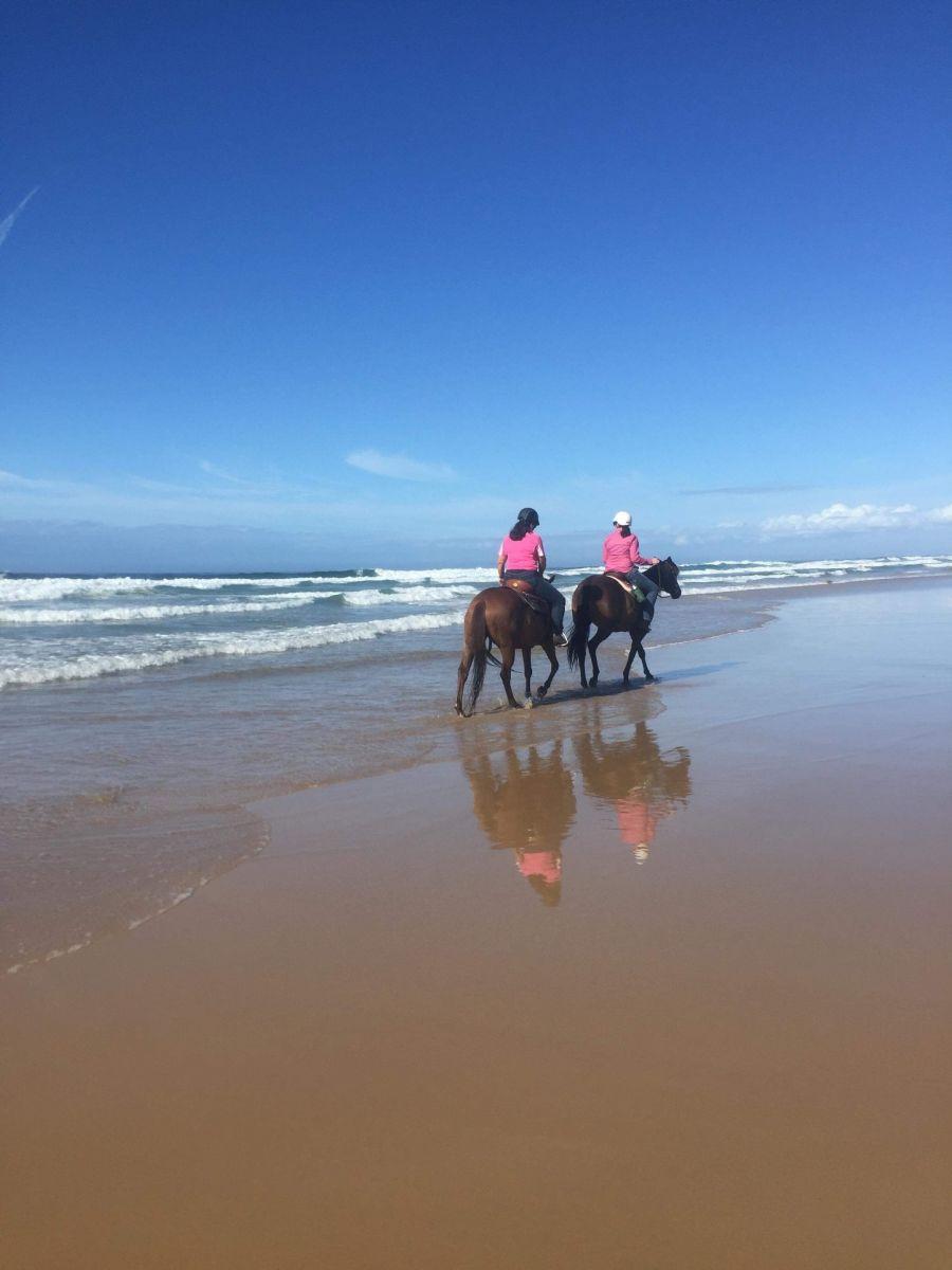 Horses at beach