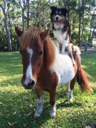 Mitzi & Rocky