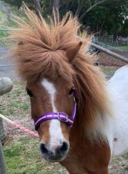 Mitzi- bad hair day
