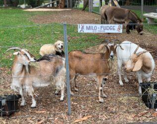 animal feed time & beno