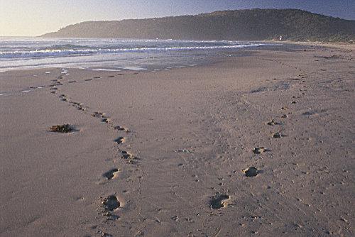 one mile footprints